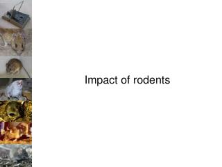 Impact of rodents