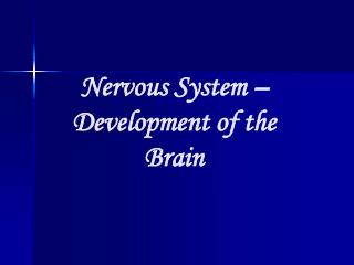 Nervous System – Development of the Brain