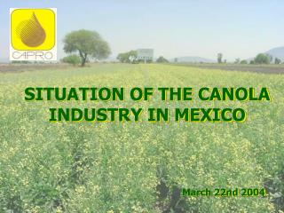 SITUATION OF THE CANOLA INDUSTRY IN MEXICO