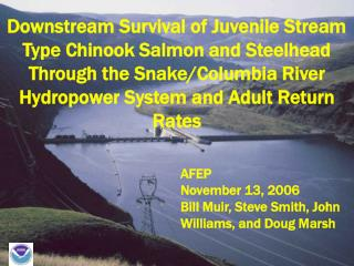 Downstream Survival of Juvenile Stream Type Chinook Salmon and Steelhead Through the Snake