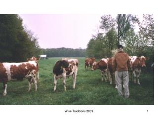Raw Milk from Pasture-Fed Cows, the Ultimate Sacred Food