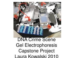 DNA Crime Scene  Gel Electrophoresis Capstone Project Laura Kowalski 2010
