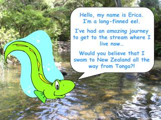 Hello, my name is Erica.    I'm a long-finned eel.