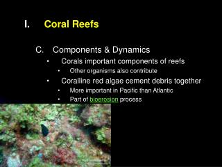 Coral Reefs Components & Dynamics Corals important components of reefs