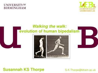 Walking the walk: evolution of human bipedalism