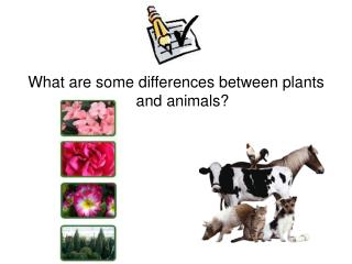 What are some differences between plants and animals?