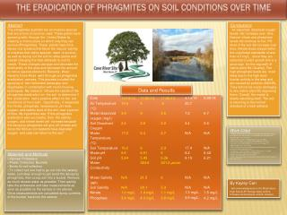 The Eradication of Phragmites on Soil Conditions Over Time