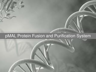pMAL Protein Fusion and Purification System