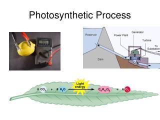 Photosynthetic Process