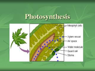 Photosynthesis