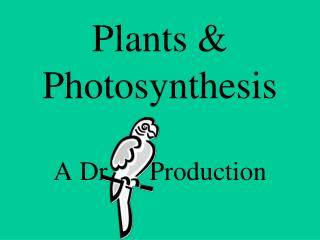 Plants & Photosynthesis A Dr. 	Production