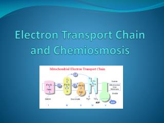 Electron Transport Chain and Chemiosmosis
