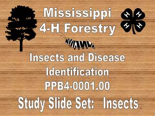 Mississippi 4-H Forestry