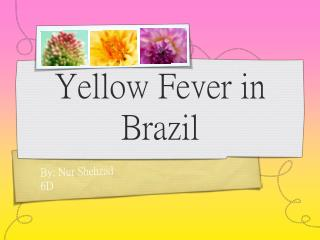 Yellow Fever in Brazil