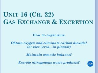 PPT - Unit 16 (Ch  22) Gas Exchange & Excretion PowerPoint