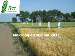 Makroogled strnina 2011.