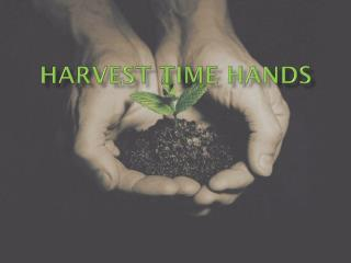 Harvest time hands