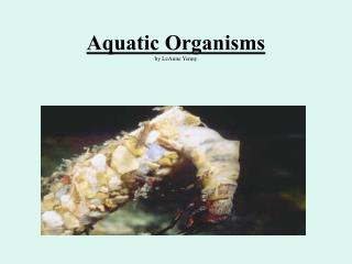 Aquatic Organisms by LeAnne Yenny