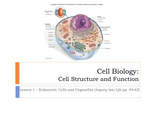 Cell Biology: Cell Structure and Function