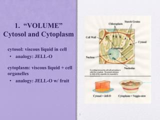"1.  ""VOLUME"" Cytosol and Cytoplasm"