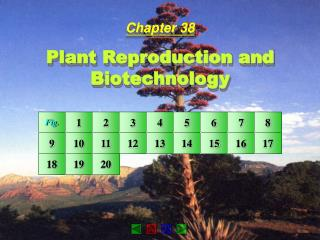 Chapter 38 Plant Reproduction and Biotechnology