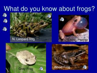 What do you know about frogs?