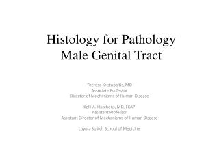 Histology for Pathology Male Genital Tract