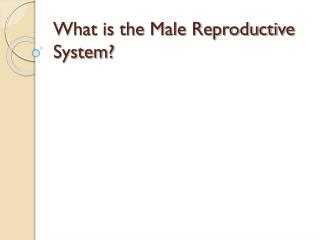 What is the Male Reproductive System?