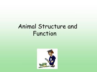 Animal Structure and 			   Function