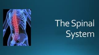 The Spinal System