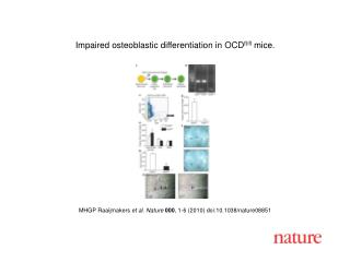 MHGP Raaijmakers  et al.  Nature 000 ,  1 - 6  (2010) doi:10.1038/nature08 851