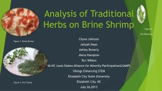 Analysis of Traditional  Herbs on Brine Shrimp