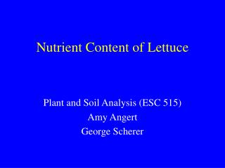Nutrient Content of Lettuce