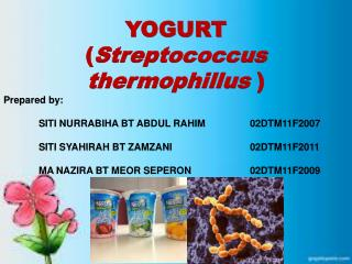 YOGURT  ( Streptococcus  thermophillus ) Prepared by: