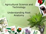Agricultural Science and Technology   Understanding Root Anatomy