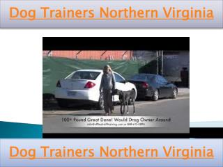 Dog Trainers Northern Virginia