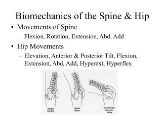 Biomechanics of the Spine & Hip