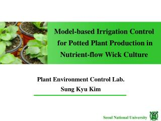 Model-based Irrigation Control  for Potted Plant Production in   Nutrient-flow Wick Culture