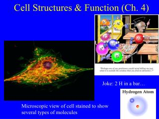 Cell Structures & Function (Ch. 4)