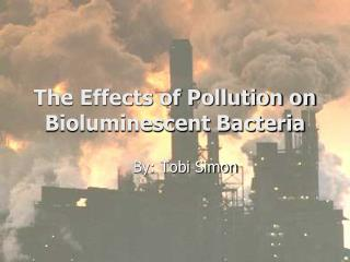 The Effects of Pollution on Bioluminescent Bacteria