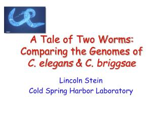 A Tale of Two Worms: Comparing the Genomes of C. elegans  & C . briggsae