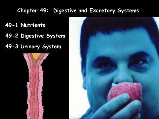 Chapter 49:  Digestive and Excretory Systems