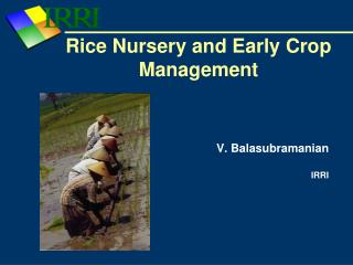 Rice Nursery and Early Crop Management