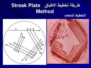????? ????? ??????? Streak Plate Method