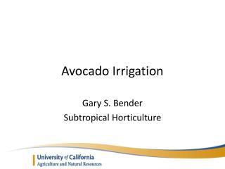 Avocado Irrigation