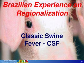 Brazilian Experience on Regionalization