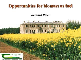 Opportunities for biomass as fuel