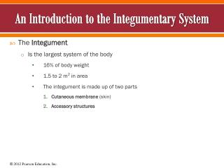 An Introduction to the Integumentary System