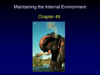 Maintaining the Internal Environment