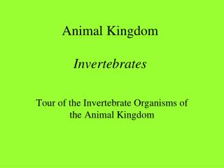 Animal Kingdom Invertebrates